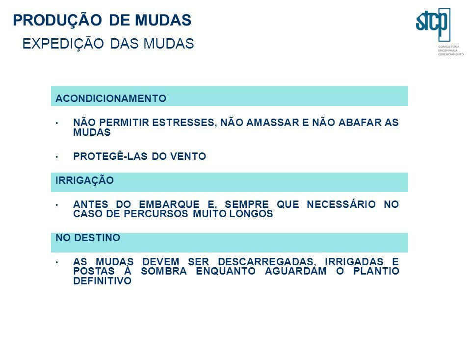 PRODUÇÃO DE MUDAS EXPEDIÇÃO DAS MUDAS ACONDICIONAMENTO NÃO PERMITIR ESTRESSES, NÃO AMASSAR E NÃO ABAFAR AS MUDAS PROTEGÊ-LAS DO VENTO IRRIGAÇÃO ANTES DO EMBARQUE E, SEMPRE QUE NECESSÁRIO NO CASO DE PERCURSOS MUITO LONGOS NO DESTINO AS MUDAS DEVEM SER DESCARREGADAS, IRRIGADAS E POSTAS À SOMBRA ENQUANTO AGUARDAM O PLANTIO DEFINITIVO