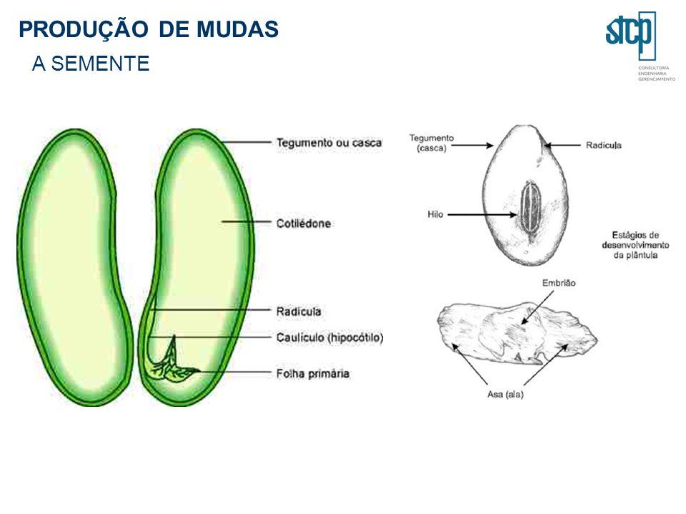 PRODUÇÃO DE MUDAS A SEMENTE