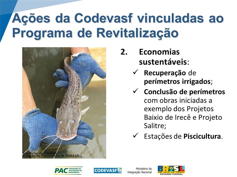 Ações da Codevasf vinculadas ao Programa de Revitalização 2.Economias sustentáveis: Recuperação de perímetros irrigados; Conclusão de perímetros com o