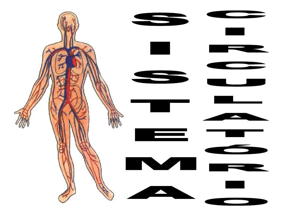 INTRODUÇÃO Atua no transporte de substâncias (nutrientes, gases, hormônios e excretas) e na defesa do organismo.