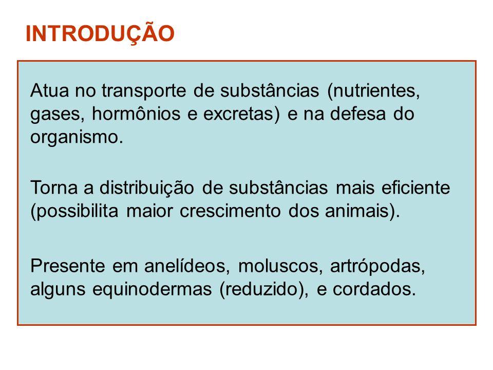 INTRODUÇÃO Atua no transporte de substâncias (nutrientes, gases, hormônios e excretas) e na defesa do organismo. Presente em anelídeos, moluscos, artr