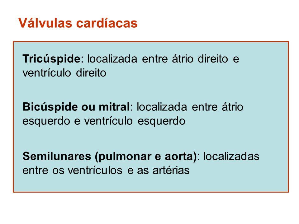 Válvulas cardíacas Tricúspide: localizada entre átrio direito e ventrículo direito Bicúspide ou mitral: localizada entre átrio esquerdo e ventrículo e