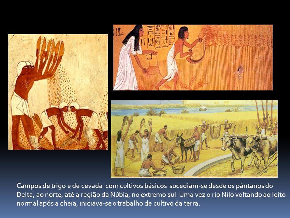 Campos de trigo e de cevada com cultivos básicos sucediam-se desde os pântanos do Delta, ao norte, até a região da Núbia, no extremo sul. Uma vez o ri