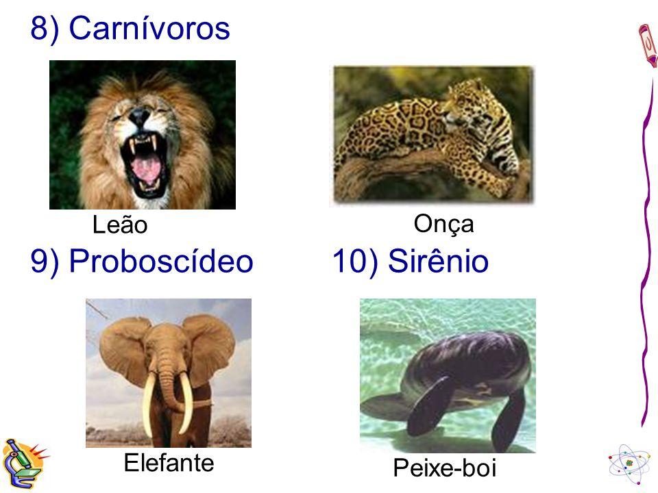 8) Carnívoros Leão Onça 9) Proboscídeo Elefante Peixe-boi 10) Sirênio