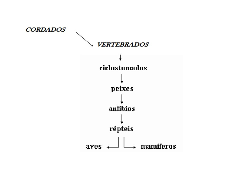 5) Roedores Capivara Rato 6) Lagomorfos Coelho Morcego 7) Quirópteros