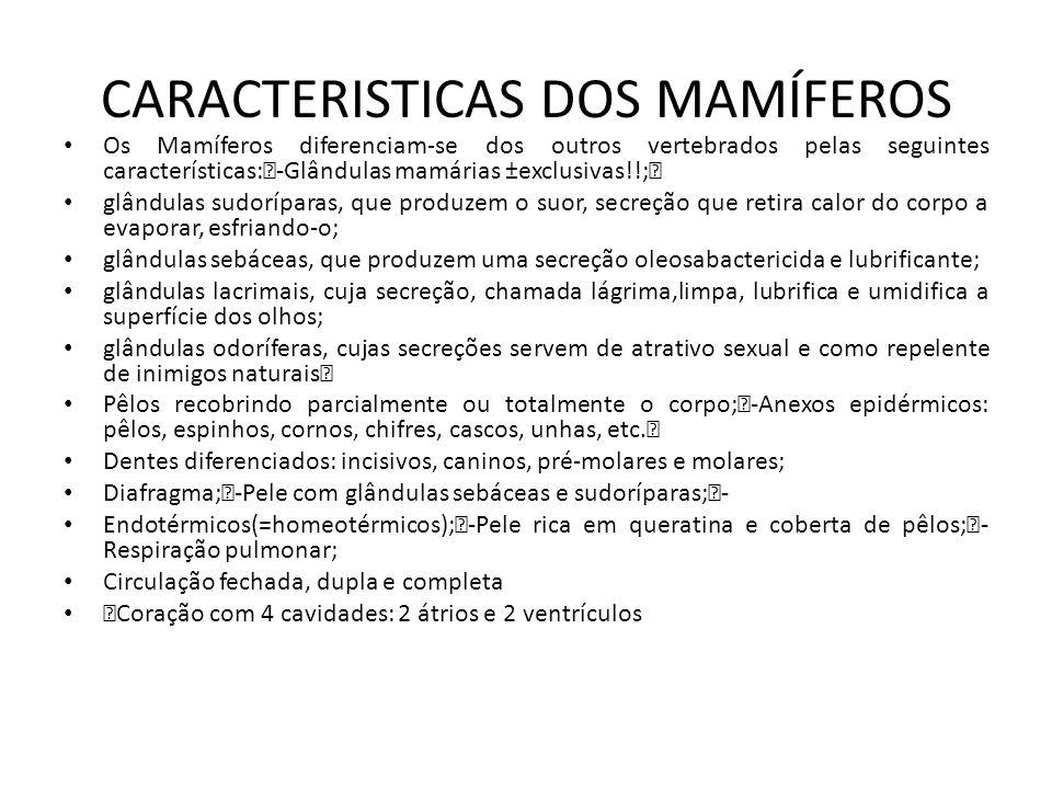 CARACTERISTICAS DOS MAMÍFEROS Os Mamíferos diferenciam-se dos outros vertebrados pelas seguintes características:‡-Glândulas mamárias ±exclusivas!!;‡