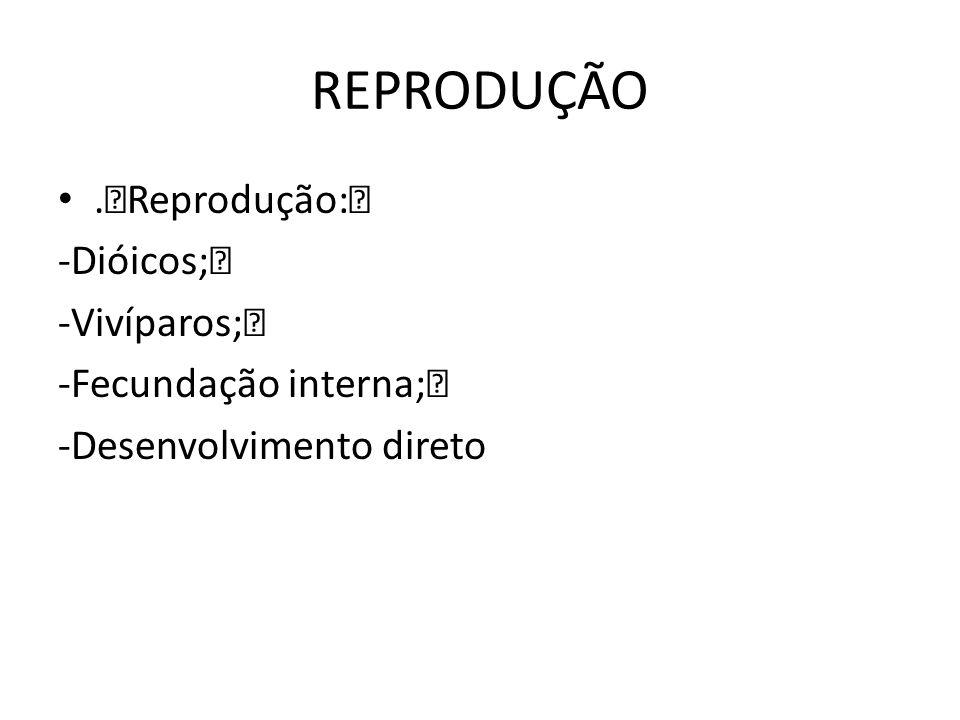 REPRODUÇÃO.‡Reprodução:‡ -Dióicos;‡ -Vivíparos;‡ -Fecundação interna;‡ -Desenvolvimento direto