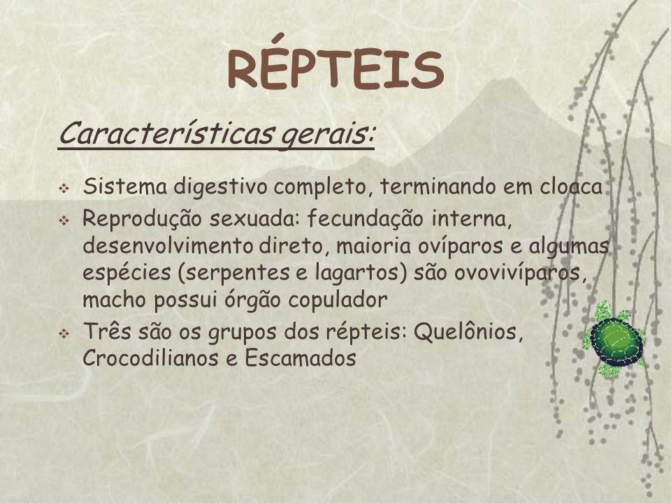 RÉPTEIS Características gerais: Sistema digestivo completo, terminando em cloaca Reprodução sexuada: fecundação interna, desenvolvimento direto, maior
