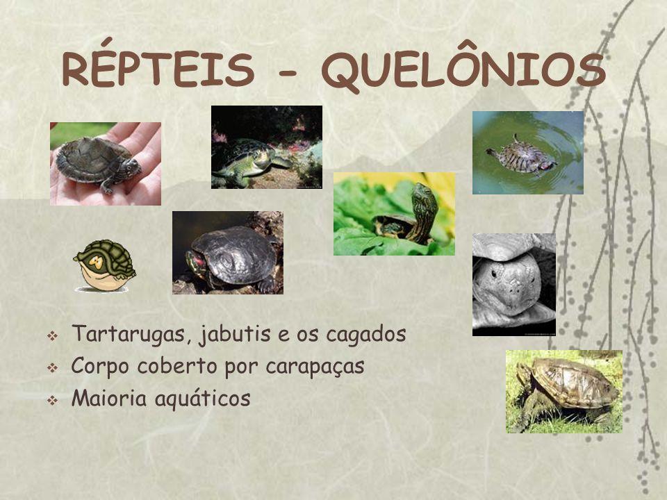 RÉPTEIS - QUELÔNIOS Tartarugas, jabutis e os cagados Corpo coberto por carapaças Maioria aquáticos
