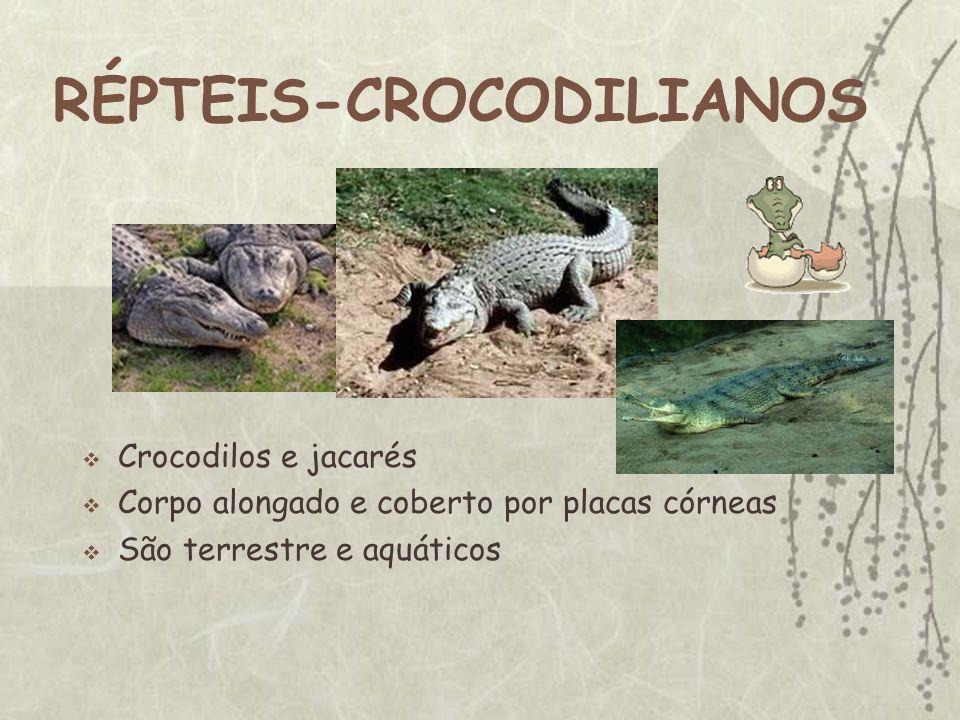 RÉPTEIS-CROCODILIANOS Crocodilos e jacarés Corpo alongado e coberto por placas córneas São terrestre e aquáticos