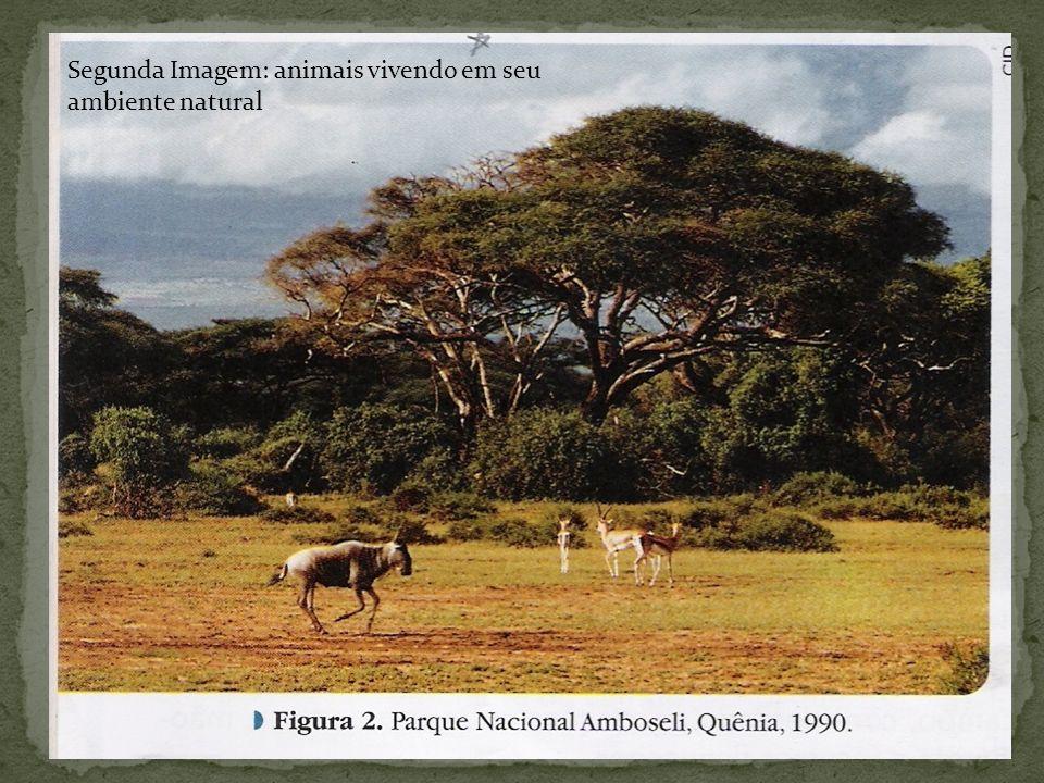 O Museu do Ipiranga, em São Paulo, é um exemplo interessante de ambiente protegido na cidade.