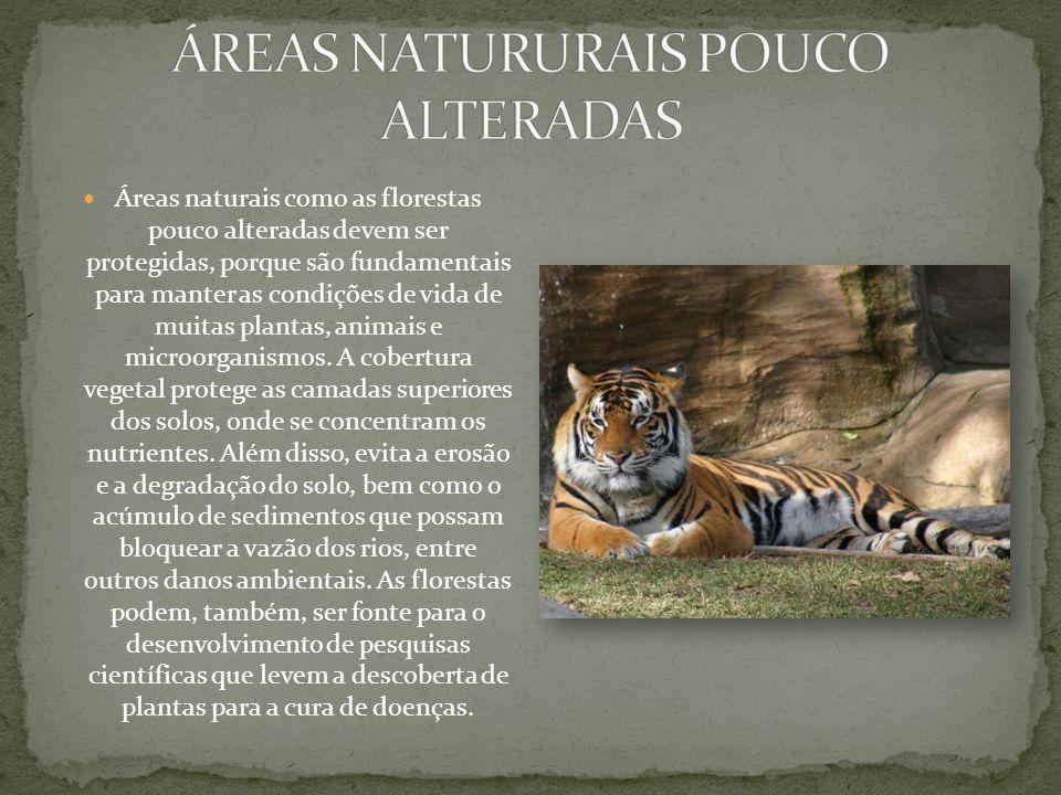 Áreas naturais como as florestas pouco alteradas devem ser protegidas, porque são fundamentais para manter as condições de vida de muitas plantas, animais e microorganismos.