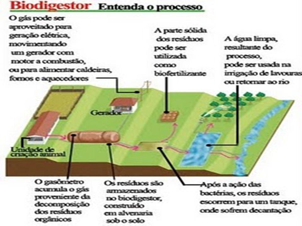 O QUE É COMPOSTAGEM decomposição da matéria orgânica contida em restos de origem animal ou vegetal, por bactérias e fungos. Este processo tem como res
