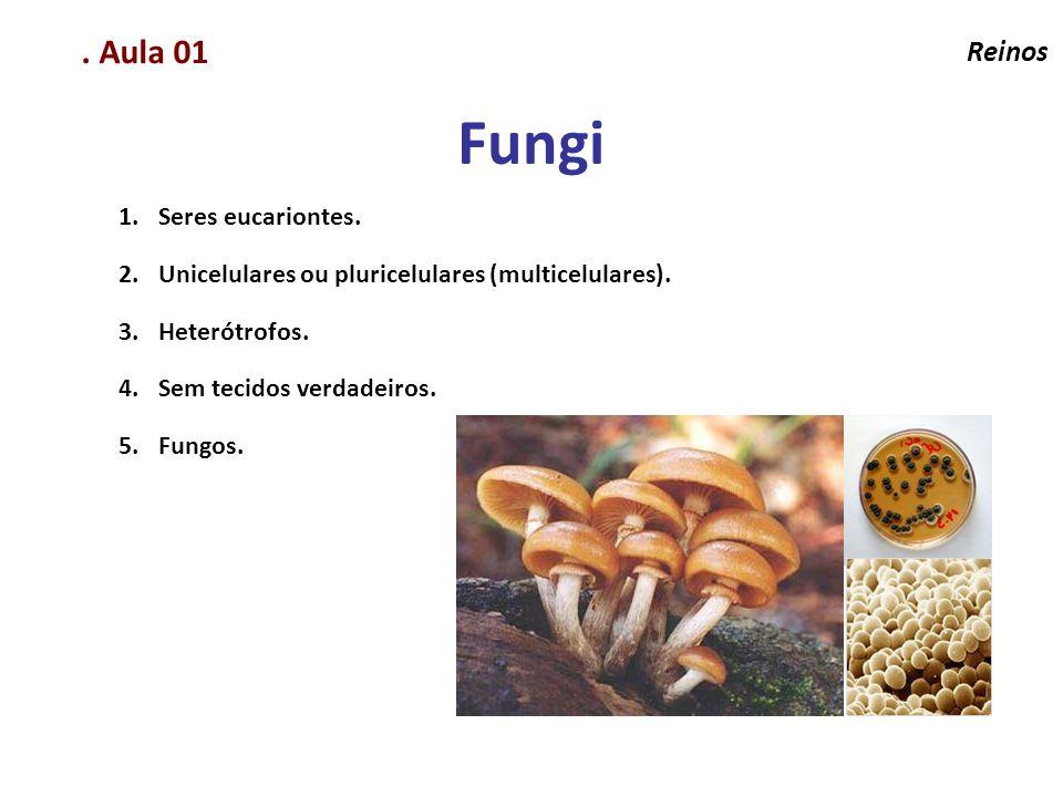 Elaboração Prof. Santer Matos. Aula 01 Reinos 1.Seres eucariontes. 2.Unicelulares ou pluricelulares (multicelulares). 3.Heterótrofos. 4.Sem tecidos ve