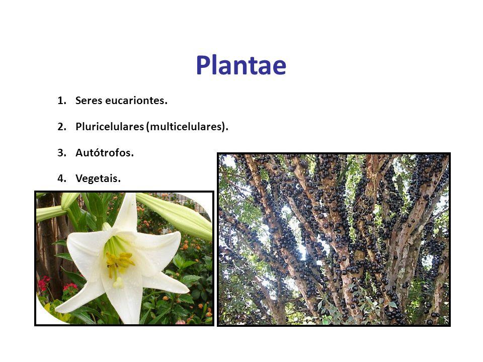 Elaboração Prof. Santer Matos 1.Seres eucariontes. 2.Pluricelulares (multicelulares). 3.Autótrofos. 4.Vegetais. Plantae