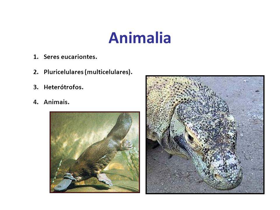 Elaboração Prof. Santer Matos 1.Seres eucariontes. 2.Pluricelulares (multicelulares). 3.Heterótrofos. 4.Animais. Animalia