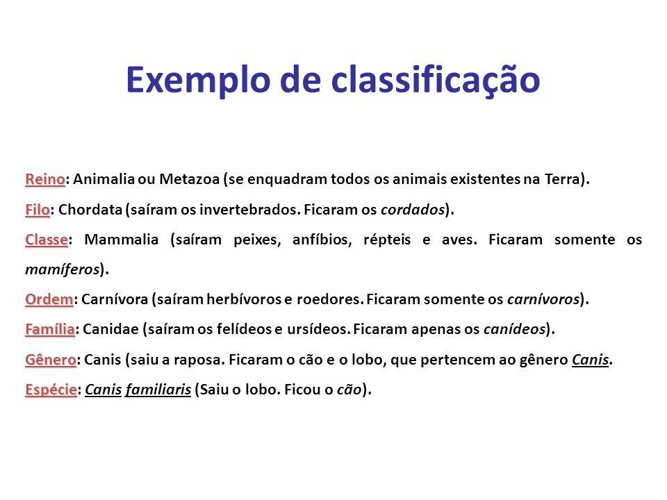 Elaboração Prof. Santer Matos Reino Reino: Animalia ou Metazoa (se enquadram todos os animais existentes na Terra). Filo Filo: Chordata (saíram os inv