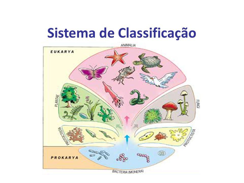 Elaboração Prof. Santer Matos Sistema de Classificação
