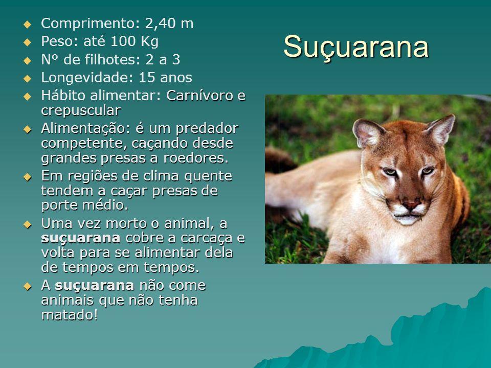 Comprimento: 2,40 m Peso: até 100 Kg N° de filhotes: 2 a 3 Longevidade: 15 anos Carnívoro e crepuscular Hábito alimentar: Carnívoro e crepuscular Alim