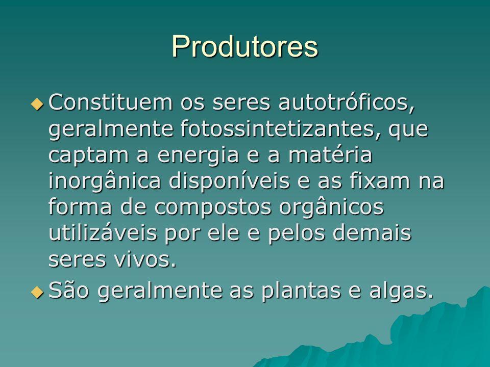 Produtores Constituem os seres autotróficos, geralmente fotossintetizantes, que captam a energia e a matéria inorgânica disponíveis e as fixam na form