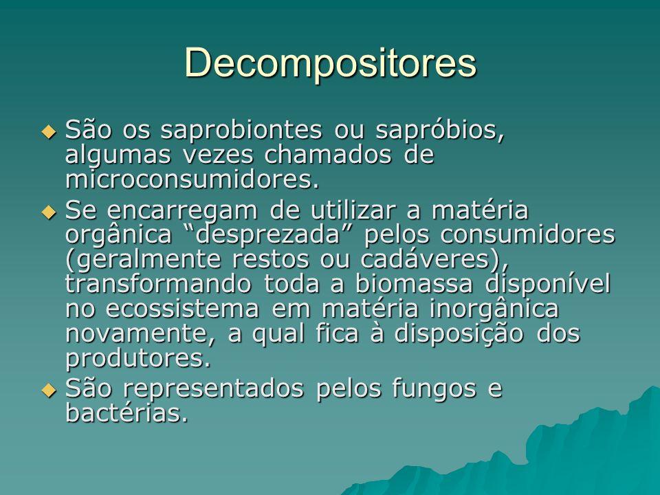 Decompositores São os saprobiontes ou sapróbios, algumas vezes chamados de microconsumidores. São os saprobiontes ou sapróbios, algumas vezes chamados