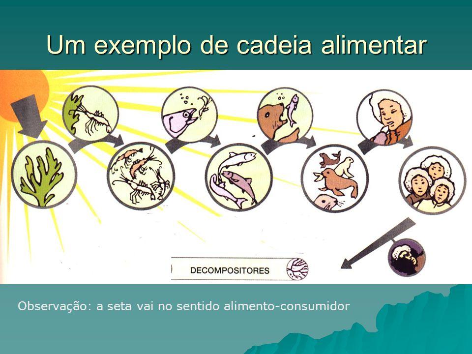 Um exemplo de cadeia alimentar Observação: a seta vai no sentido alimento-consumidor