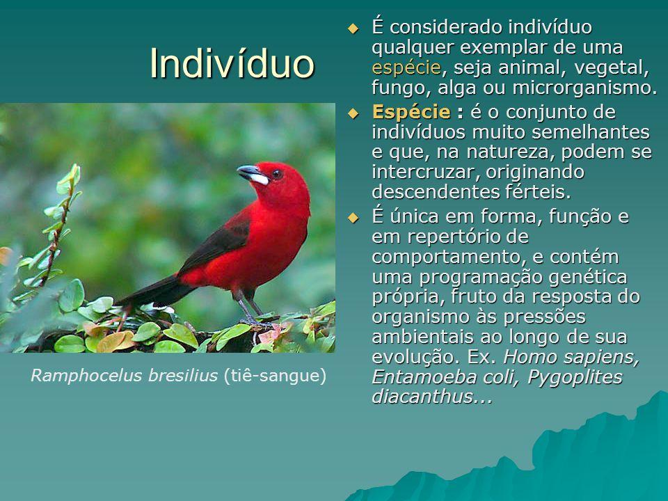 Indivíduo É considerado indivíduo qualquer exemplar de uma espécie, seja animal, vegetal, fungo, alga ou microrganismo. É considerado indivíduo qualqu