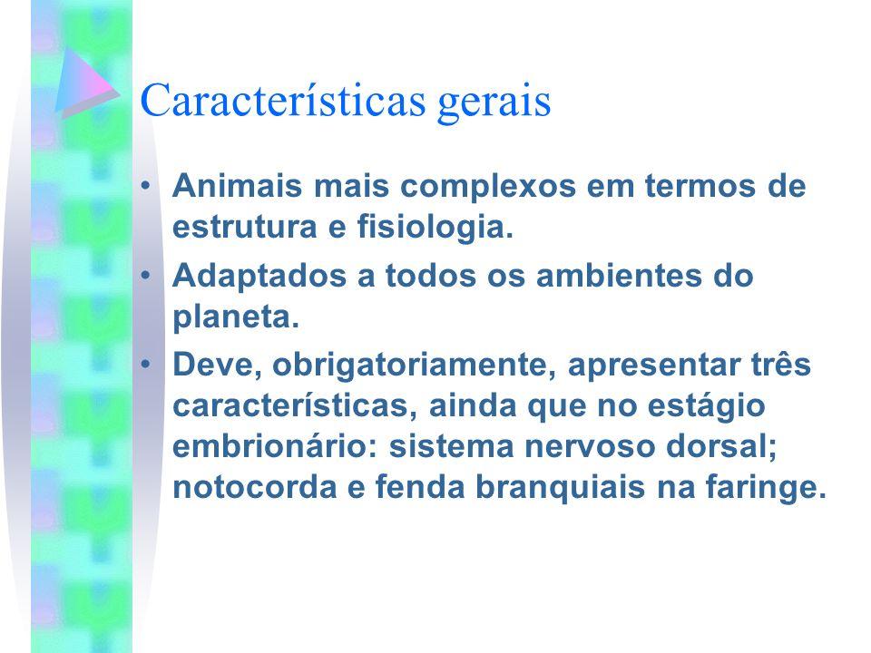 Características gerais Animais mais complexos em termos de estrutura e fisiologia. Adaptados a todos os ambientes do planeta. Deve, obrigatoriamente,