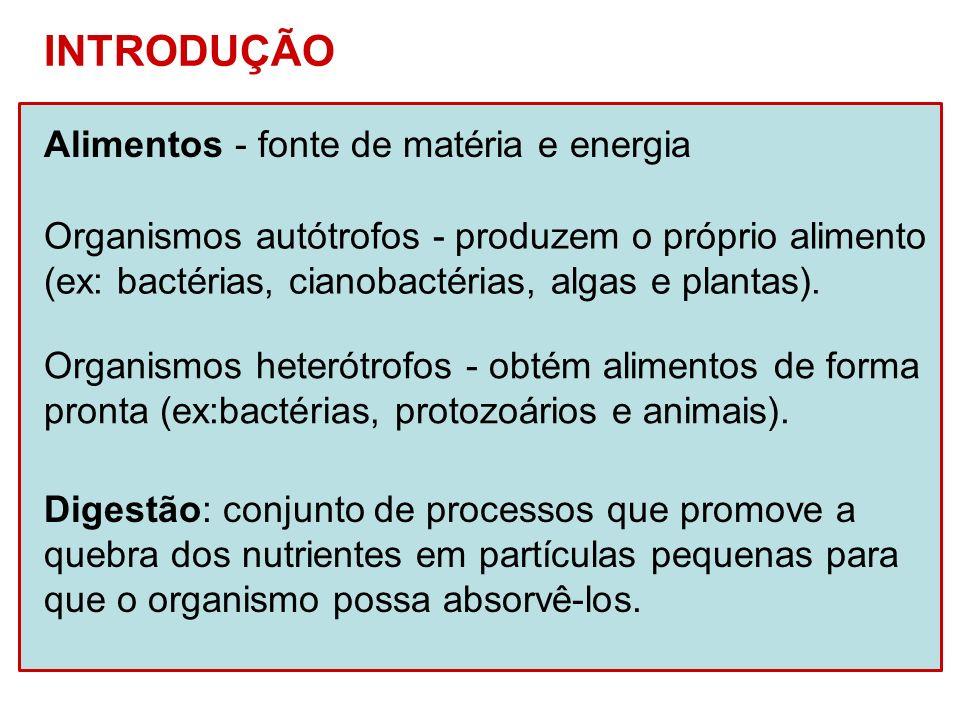 INTRODUÇÃO Alimentos - fonte de matéria e energia Organismos heterótrofos - obtém alimentos de forma pronta (ex:bactérias, protozoários e animais). Di