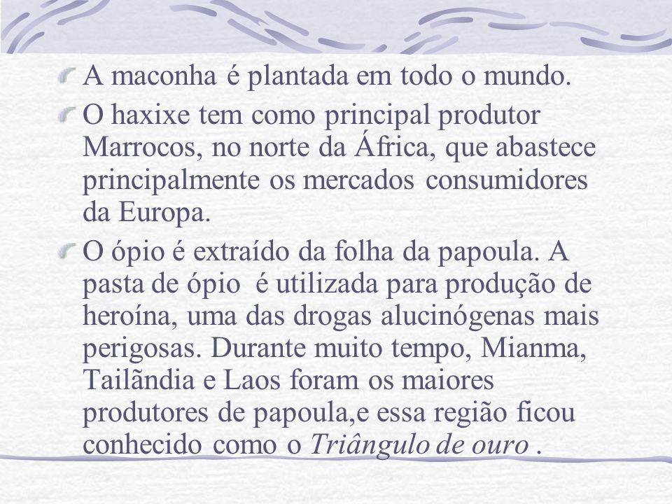 A maconha é plantada em todo o mundo. O haxixe tem como principal produtor Marrocos, no norte da África, que abastece principalmente os mercados consu