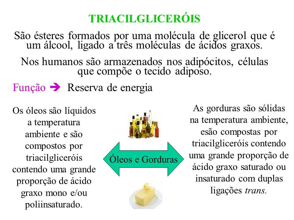 Óleos e Gorduras TRIACILGLICERÓIS São ésteres formados por uma molécula de glicerol que é um álcool, ligado a três moléculas de ácidos graxos. Nos hum