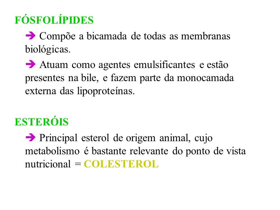 FÓSFOLÍPIDES Compõe a bicamada de todas as membranas biológicas. Atuam como agentes emulsificantes e estão presentes na bile, e fazem parte da monocam