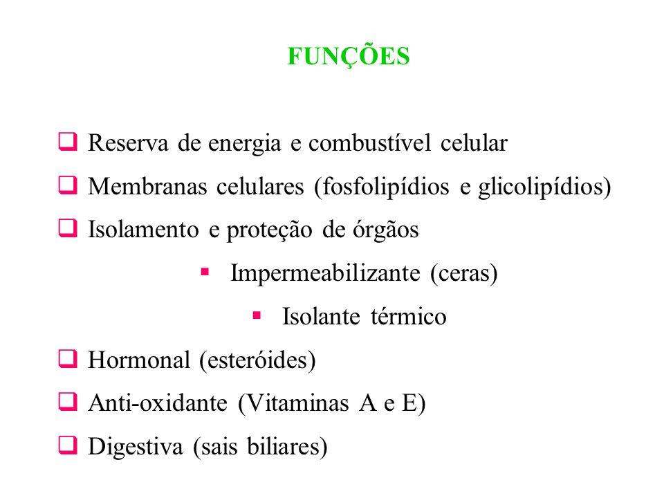 FUNÇÕES Reserva de energia e combustível celular Membranas celulares (fosfolipídios e glicolipídios) Isolamento e proteção de órgãos Impermeabilizante