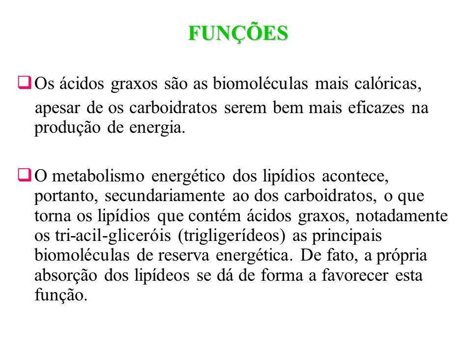 FUNÇÕES Os ácidos graxos são as biomoléculas mais calóricas, apesar de os carboidratos serem bem mais eficazes na produção de energia. O metabolismo e