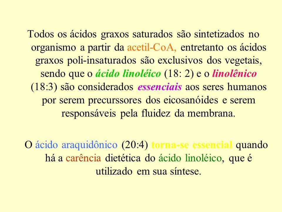 Todos os ácidos graxos saturados são sintetizados no organismo a partir da acetil-CoA, entretanto os ácidos graxos poli-insaturados são exclusivos dos