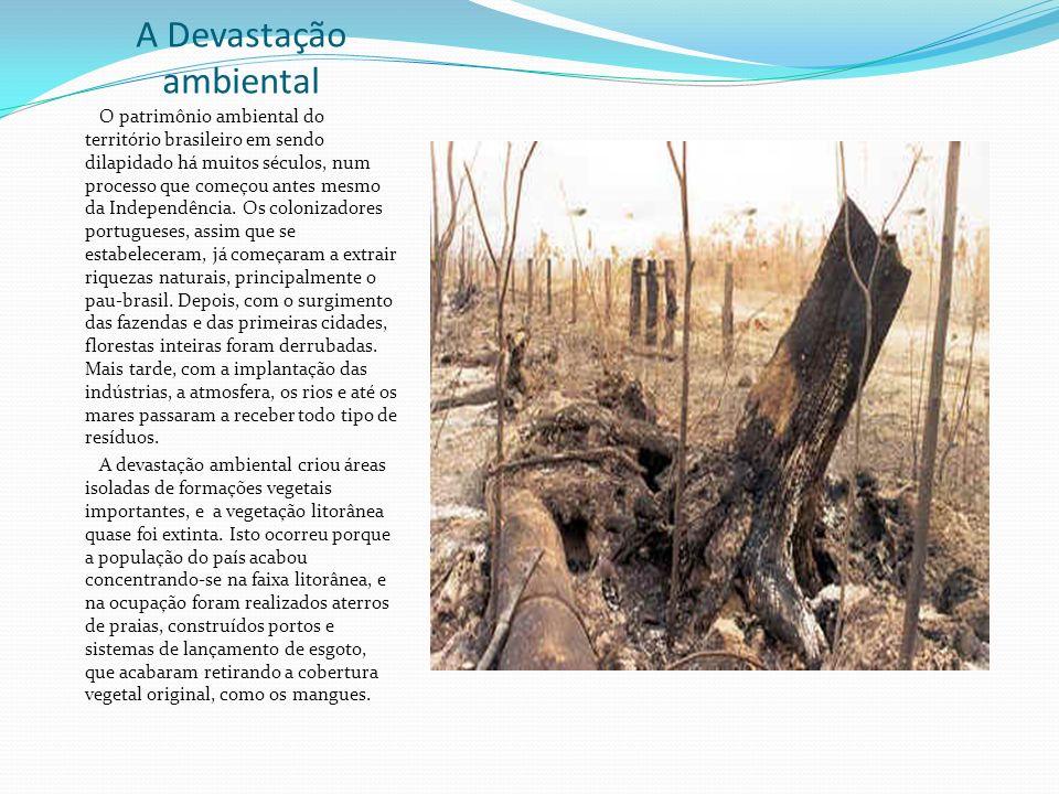 O Movimento ambientalista no Brasil Foto: Greenpeace no Brasil Não são apenas os governos que se preocupam com a conservação da riqueza genética do Br