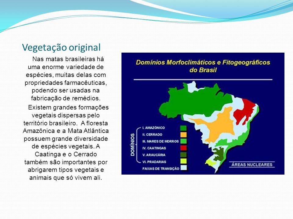 Vegetação original Nas matas brasileiras há uma enorme variedade de espécies, muitas delas com propriedades farmacêuticas, podendo ser usadas na fabricação de remédios.