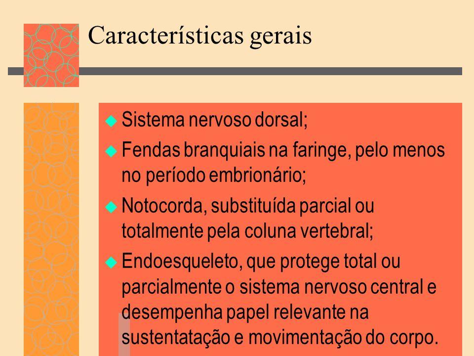 Características gerais Sistema nervoso dorsal; Fendas branquiais na faringe, pelo menos no período embrionário; Notocorda, substituída parcial ou tota