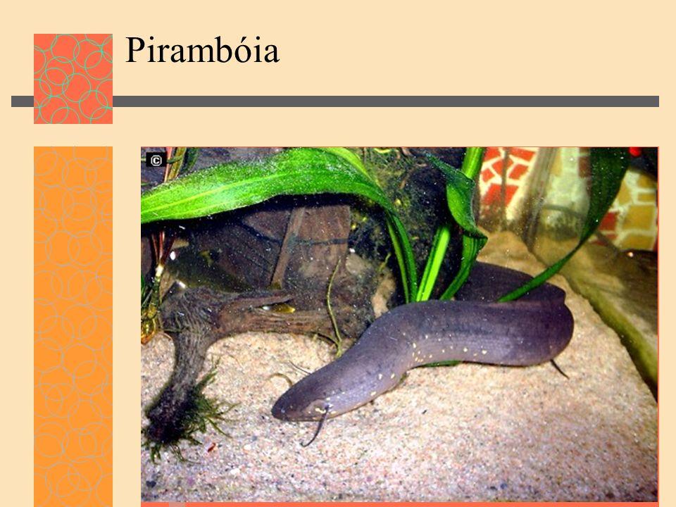 Pirambóia