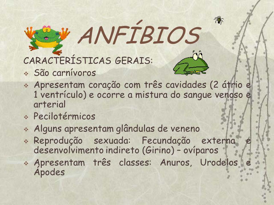 Sugestões de Pesquisas na Net: O MUNDO ANIMAl http://www.animalshow.hpg.ig.com.br/index.htm BIOMANIA http://www.biomania.com.br/ ZOOLOGIA http://curlygirl.no.sapo.pt/home.htm - buscahttp://curlygirl.no.sapo.pt/home.htm - busca/