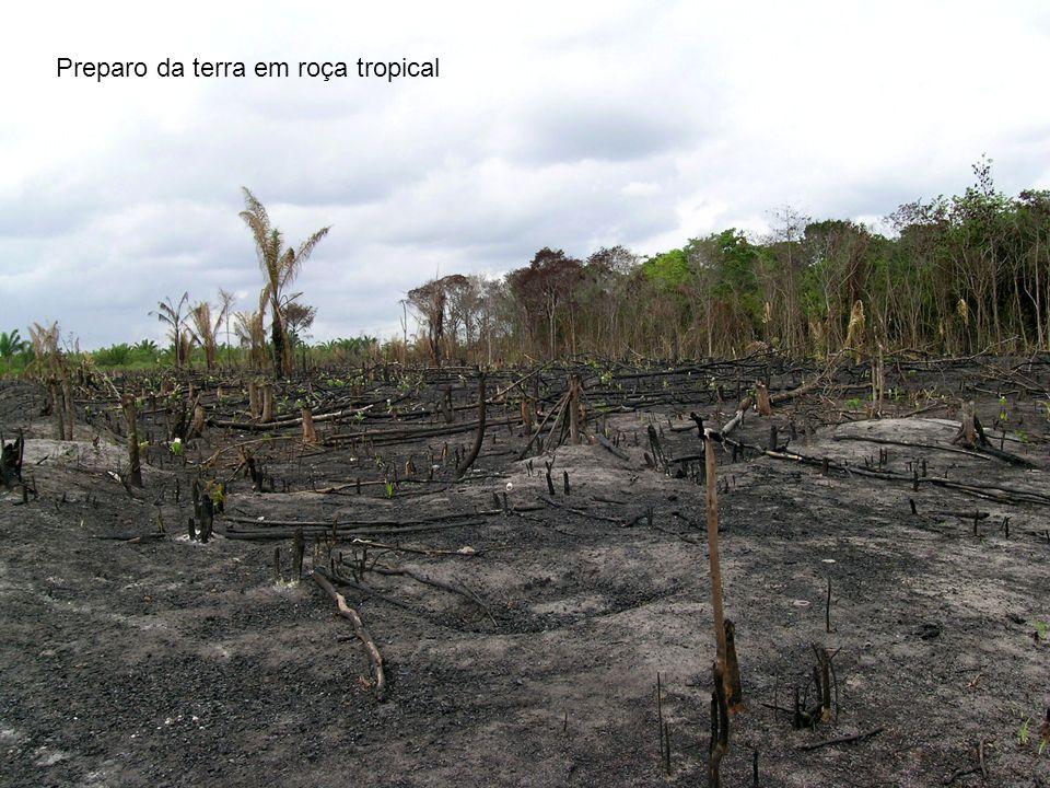 Preparo da terra em roça tropical