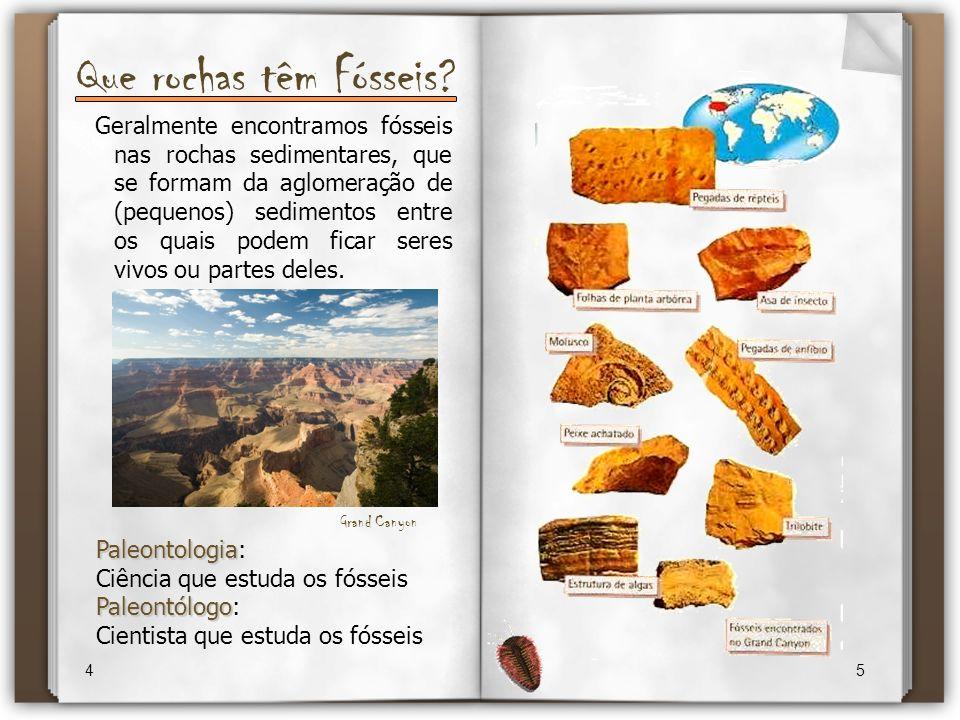 Que rochas têm Fósseis? 4 5 Geralmente encontramos fósseis nas rochas sedimentares, que se formam da aglomeração de (pequenos) sedimentos entre os qua