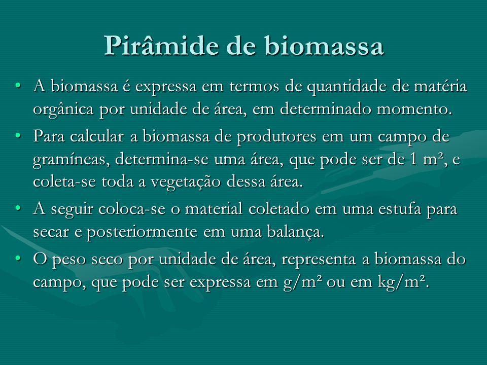 Pirâmide de biomassa A biomassa é expressa em termos de quantidade de matéria orgânica por unidade de área, em determinado momento.A biomassa é expres
