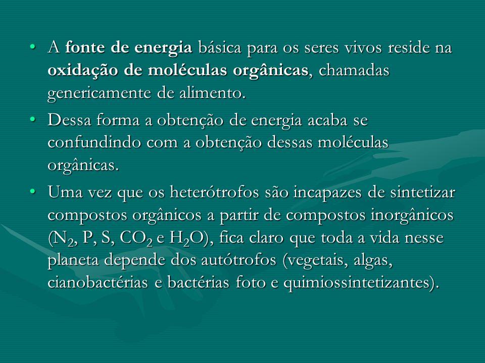 A fonte de energia básica para os seres vivos reside na oxidação de moléculas orgânicas, chamadas genericamente de alimento.A fonte de energia básica