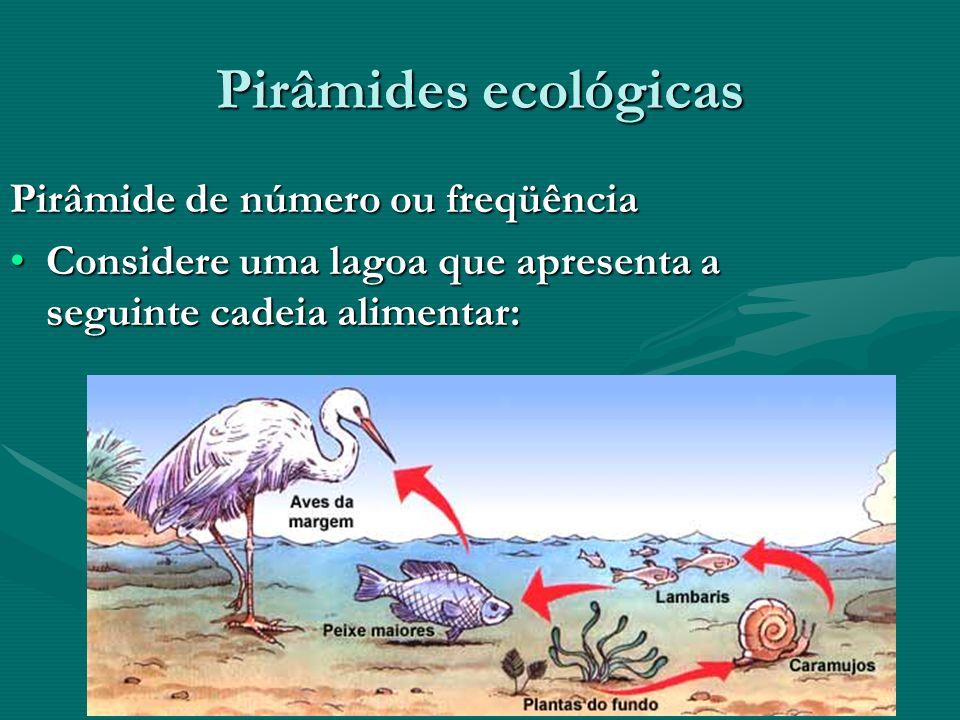 Pirâmides ecológicas Pirâmide de número ou freqüência Considere uma lagoa que apresenta a seguinte cadeia alimentar:Considere uma lagoa que apresenta