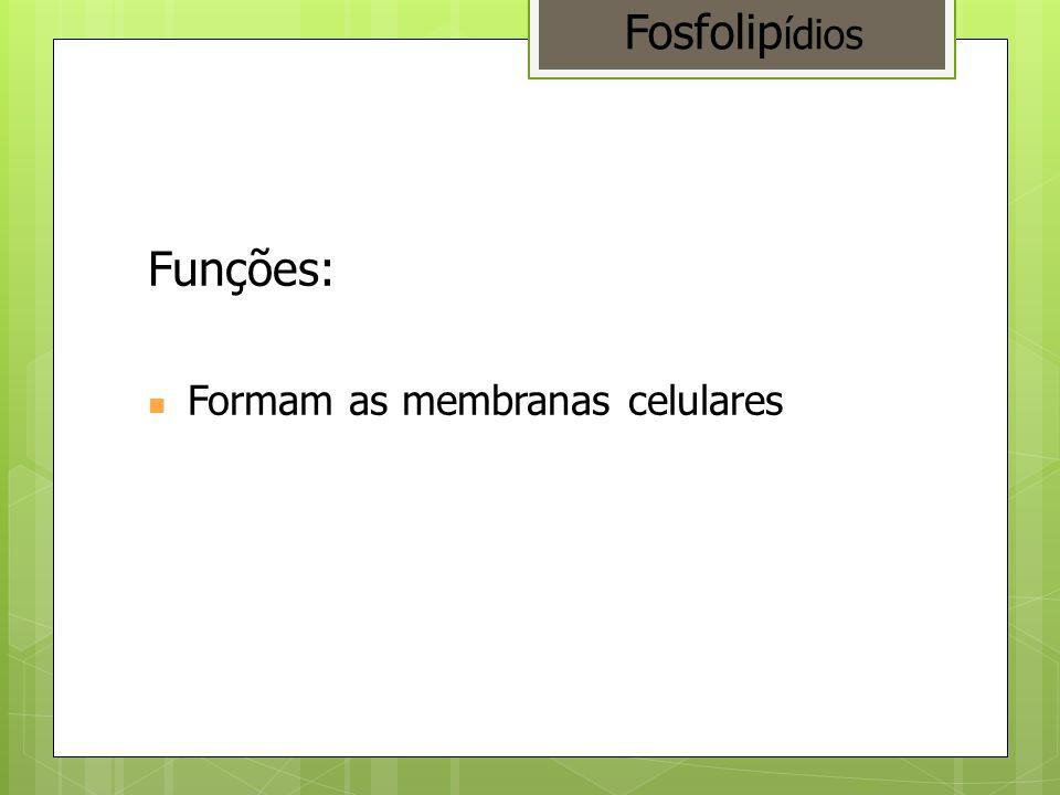 Funções: Formam as membranas celulares Fosfolip ídios