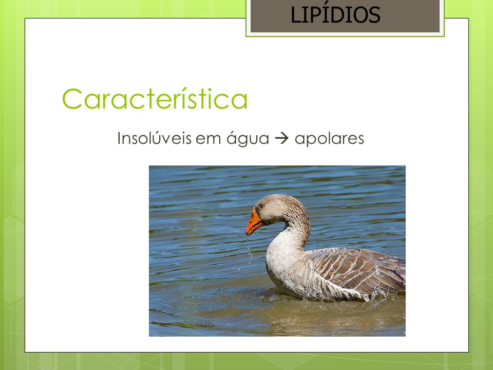 Classificação Triglicerídios (óleos e gorduras) Esteróides Fosfolipídios Cerídios Carotenóides LIPÍDIOS