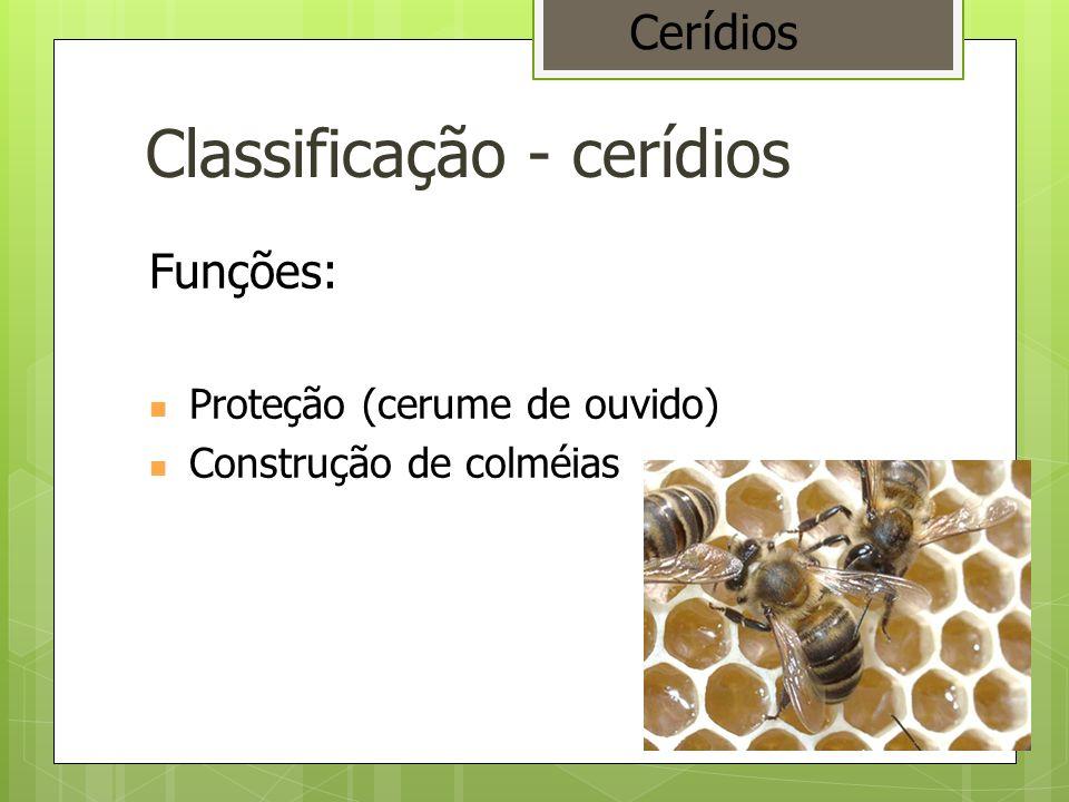 Classificação - cerídios Funções: Proteção (cerume de ouvido) Construção de colméias Cerídios