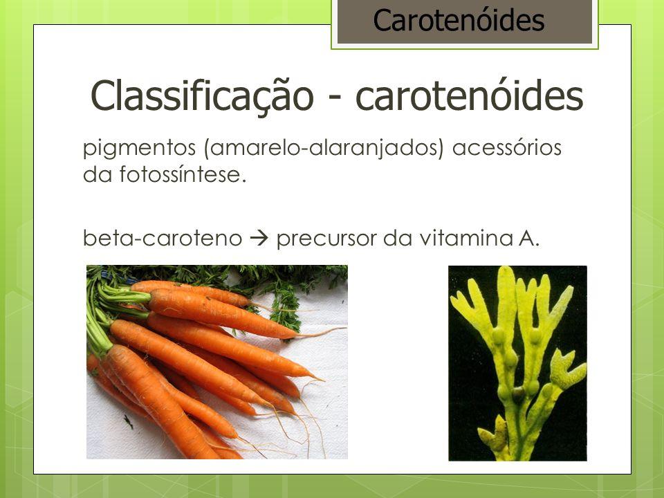 Classificação - carotenóides pigmentos (amarelo-alaranjados) acessórios da fotossíntese. beta-caroteno precursor da vitamina A. Carotenóides