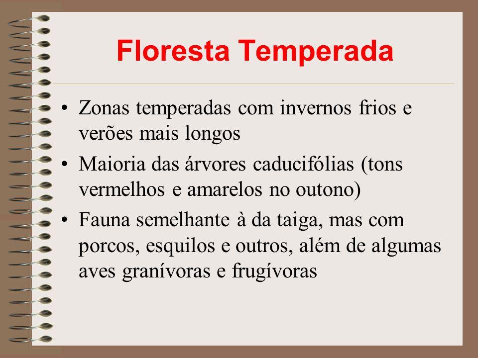 Zonas temperadas com invernos frios e verões mais longos Maioria das árvores caducifólias (tons vermelhos e amarelos no outono) Fauna semelhante à da